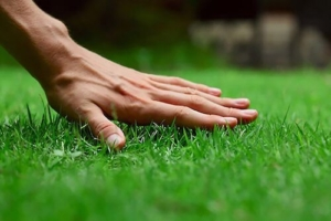 olean new york lawn care